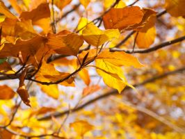 Autumn Leaves by Kleevie