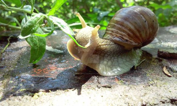 Snail by Cleo-Azimuth