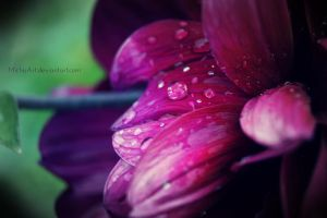 Drop on purple blossom by MichisArt