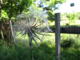 Ethereal Ball of Seeds 7 by Windthin