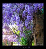 Where the Wisteria Blooms by WickedNox