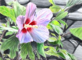 Flower by fifthdimensional