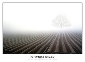A White Study by lostheart