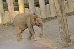 Elephant baby stock 1 by windfuchs