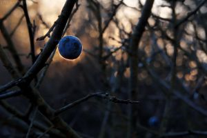 Blue orb by rosaarvensis