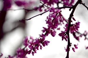 Spring Tree by iZersy