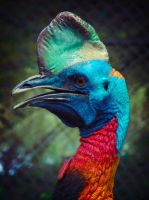 Cassowary profile by CrossMirage