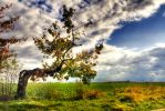 the tree by zeischold