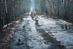 Trail Of Mud And Snow by LindaMarieAnson