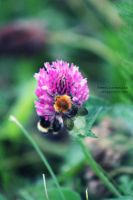 .:Bumble Bees:. by ReseInsomniac