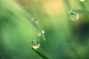 Green emotions. by MauiMelle