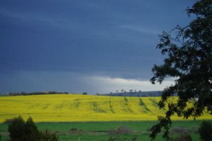 Canola Storm 2 by Buggie1112