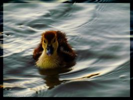 Small swimmer by Ladywolf1997