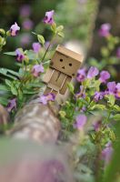 Alone Danbo by inzanenewbie