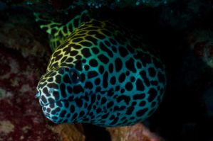 Moray Eel by leighd