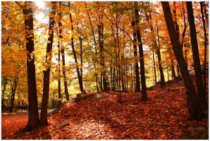 Autumn in the Northeast by Delacorr