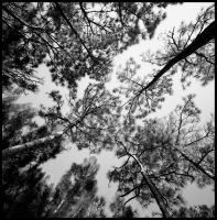 Joined trees.img664 1 1 by harrietsfriend