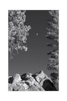 Rocks, Trees and Moon by welder
