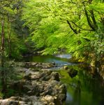 River of Green by scotto