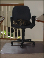 Cat Nap On The Computer Chair by BandaidPorn