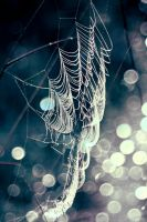 web... by iwetka
