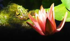 frog and flower by frei76