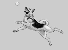 Fetch Sketch by vixentheangryfox