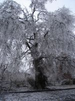 Tree of Ice V by Nereja