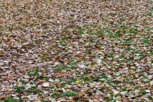 Leaves by AndreaMetallurgico