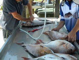 Catch of the Day 001 - HB593200 by hb593200
