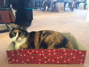 Cat in a Box by ScorpioMonkey