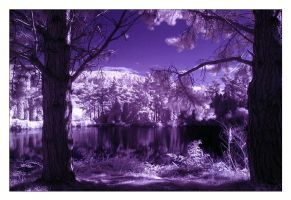 IR Forest III by cesalv