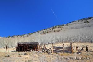 Cow Camp by HighCountryImages