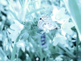 Blue butterfly by nastya-wili