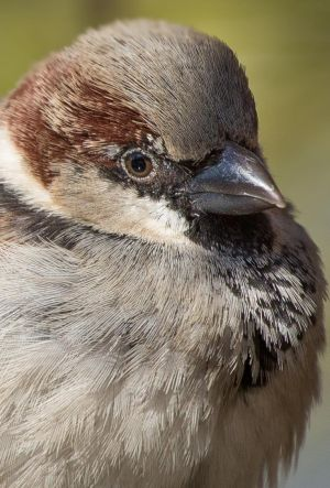 Portrait of a sparrow by luka567