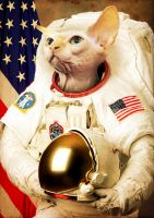 Astronaut Cat by Bakus-design