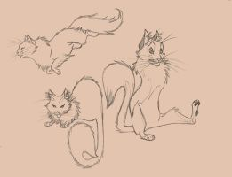 Cats by Mue