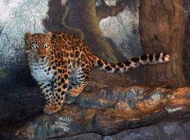 Denver Zoo 33 Leopard by Falln-Stock