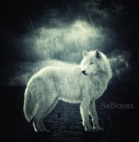 RainWolf by SadSonata