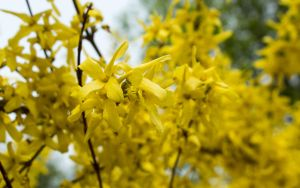 Spring 2015 23 yellow by Henrikson
