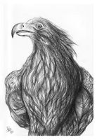 Museum Illustrations #02 [Wedge-tailed Eagle] by darkspeeds