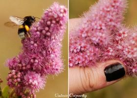 Nail and a bumblebee by Sartr