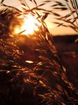 grass and sunset by Caledonia87