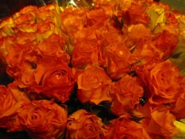 Autumn Fire Roses by VectorWomanDRNE-Soul