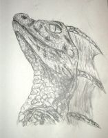 A dragon by name by Twimper