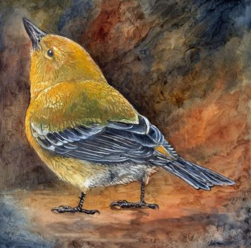 Pine Warbler Study by ursulav