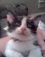 my crazy new kitten by FuNiSmYwAy