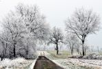 in the winter morning by augenweide