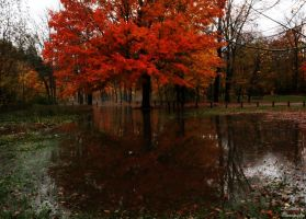 Flooded autumn by photographygirl13