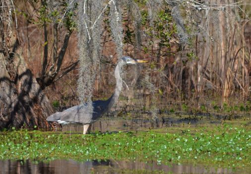 Hiding Behind the Spanish Moss by Photography-by-Image